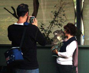 cohunua-koala-park-2
