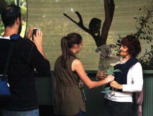 cohunua-koala-park-3