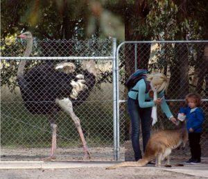 cohunua-koala-park-16