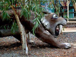cohunua-koala-park-28
