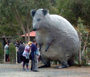 cohunua-koala-park-4