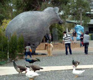 cohunua-koala-park-46