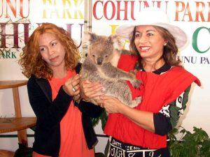 Malasian Queen in Cohunu Koala Park